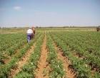 El ayuntamiento de Écija valora muy positivamente el acuerdo alcanzado en la reforma de la política agraria común.
