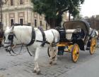 Se crean las Ordenanzas Reguladoras del servicio turístico de coches de caballos en Écija.