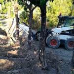 Ya se conoce el paradero de los árboles de la Plaza de Santa Cruz de Écija