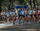 Gran actuación de los atletas ecijanos en el Campeonato de Andalucía de Cross celebrado en San Roque (Cádiz) – video