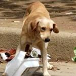Las Centrales Sindicales con representación en el Ayuntamiento de Écija, exigen se cumpla las obligaciones y responsabilidades con los animales abandonados