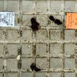 A QUIEN CORRESPONDA: Hasta cuando las cacas de perros en Écija