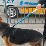 Un perro pastor alemán provoca el desconcierto y panico de niños y padres en el Parque San Pablo de Écija